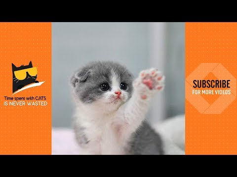 What A Cute Little Thing 😍   Cute Kittens Video 2019
