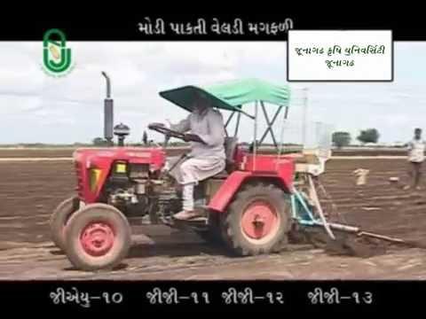 Kharif Groundnut Cultivation (ચોમાસા મગફળીની વૈજ્ઞાનિક ખેતી પદ્ધતિ)