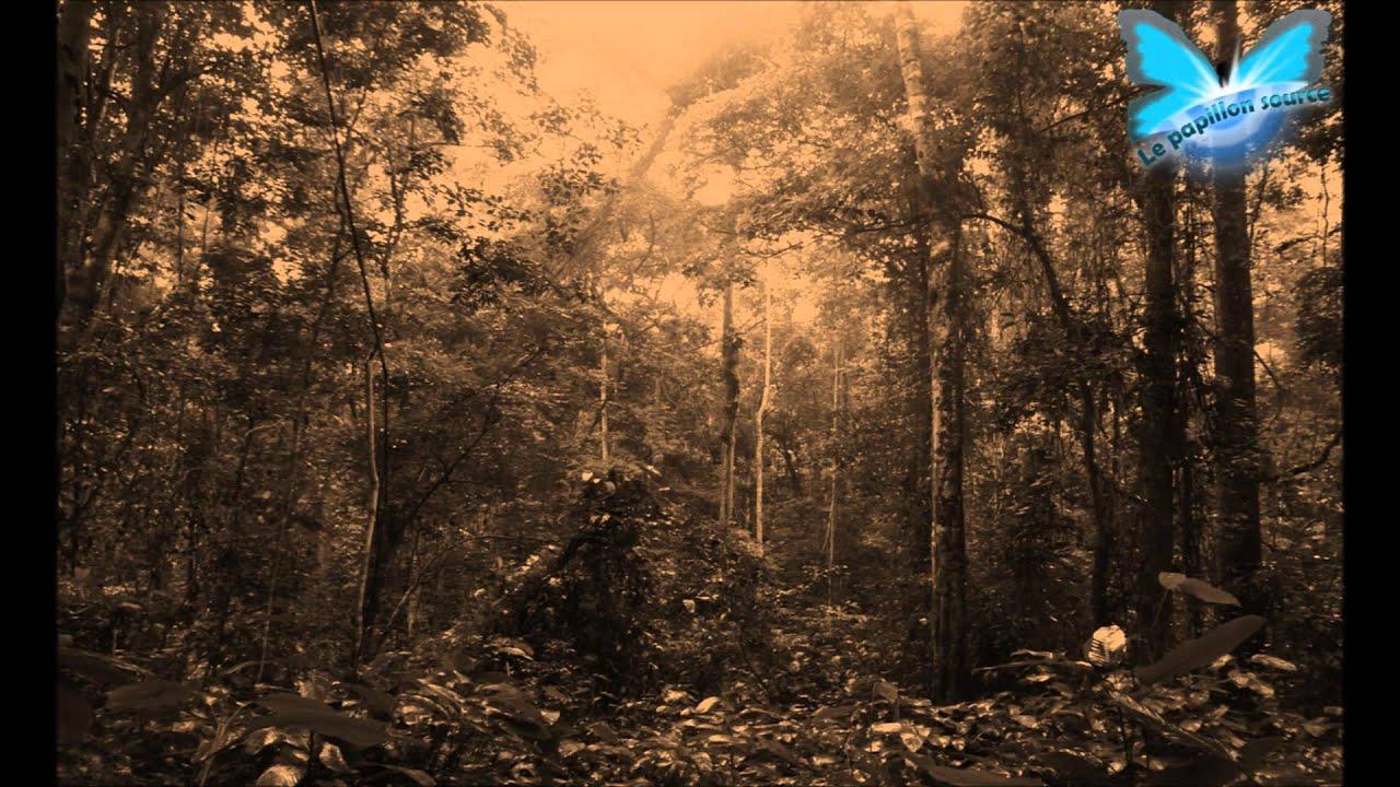 Parc à thème forestier - EL4DEV Le Papillon Source Inner Africa
