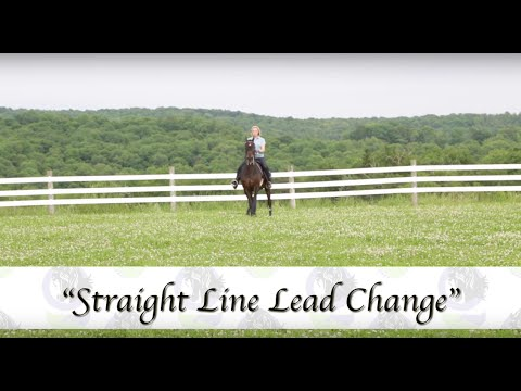 Equitating the Morgan Horse with Alicia Owens