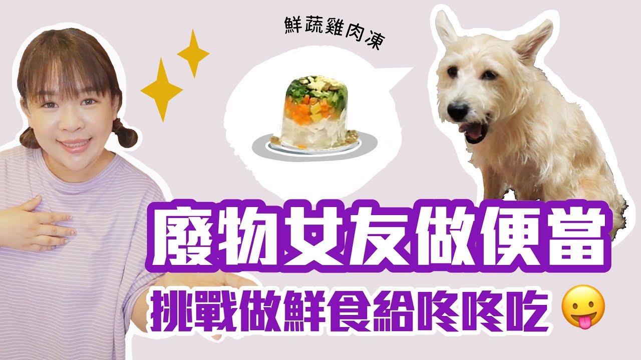 【廢物女友做便當#5】第一次做狗狗鮮食,咚咚會賞臉嗎?❤︎古娃娃WawaKu