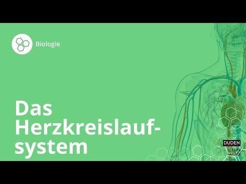 Das Herzkreislaufsystem:So Funktioniert's!– Biologie   Duden Learnattack