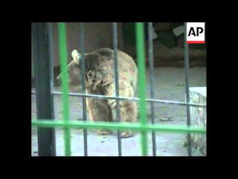 Families visit Baghdad zoo during Eid
