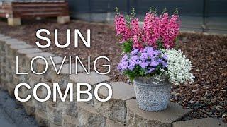 Sun Loving Combination