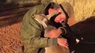 Любовь животных и человека - до слез