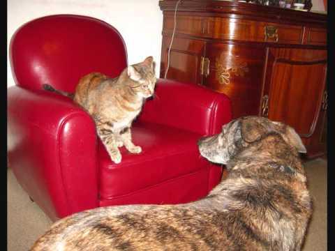 Rosenberg directs Dédé - Tond les chiens, coup' les chats