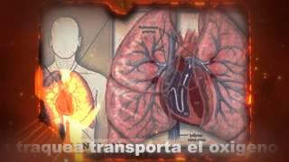 Respiracion aerobia