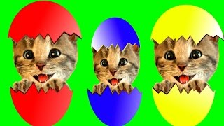Fun Baby Pet Care Kids Games Playful Colors, Fun Little Cat Animation Games for