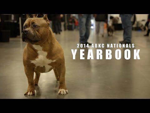 THE FINEST AMERICAN BULLIES IN THE WORLD, 2014 ABKC NATIONALS