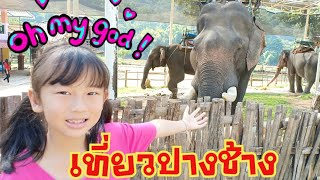 เที่ยวปางช้างเขียงราย(พี่ช้างตัวใหญ่มาก)/จ๊ะจ๋า