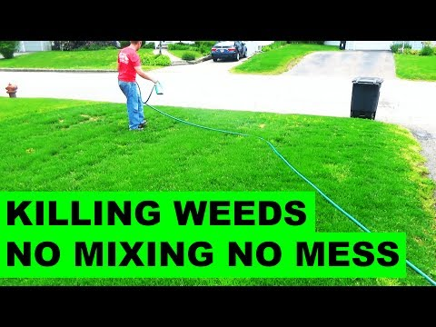 How to get rid of weeds in the lawn