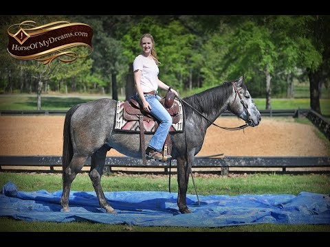 Storm's Video - Gentle Grey Family Trail Horse For Sale