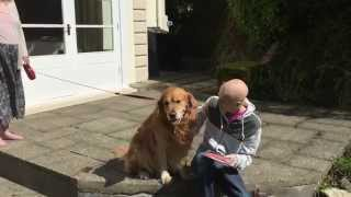 Golden Retriever Predicts Uk General Election