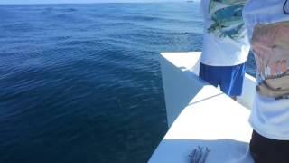 Kingfish on the Sea Legs IIII