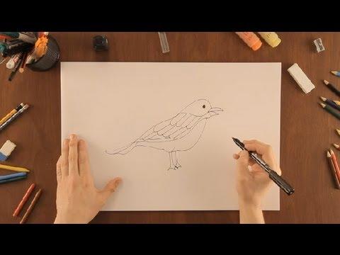 Worksheet. Cmo dibujar un pjaro  Dibujos de la Naturaleza  YouTube