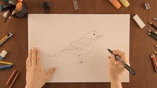 Cómo dibujar un pájaro : Dibujos de la Naturaleza
