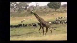 South Sudan Music - Dina Maruach - Munda(Smads musica)