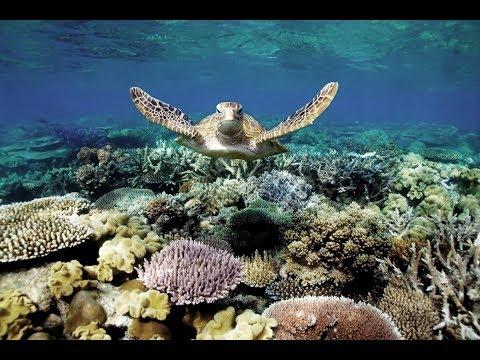 Freedive Bunaken Island - AIKOAKA - NORTH SULAWESI - MANADO TRIP - DISCOVER INDONESIA