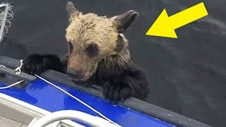 Когда рыбаки поняли, зачем медведи залезают в их лодку было уже слишком поздно