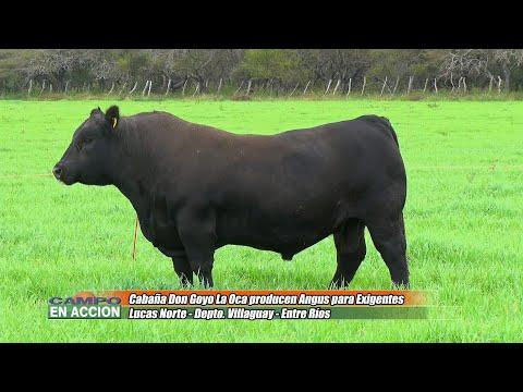 Pablo Fichman - Productor Ganadero - En Cabaña Don Goyo - La Oca producen Angus para exigentes