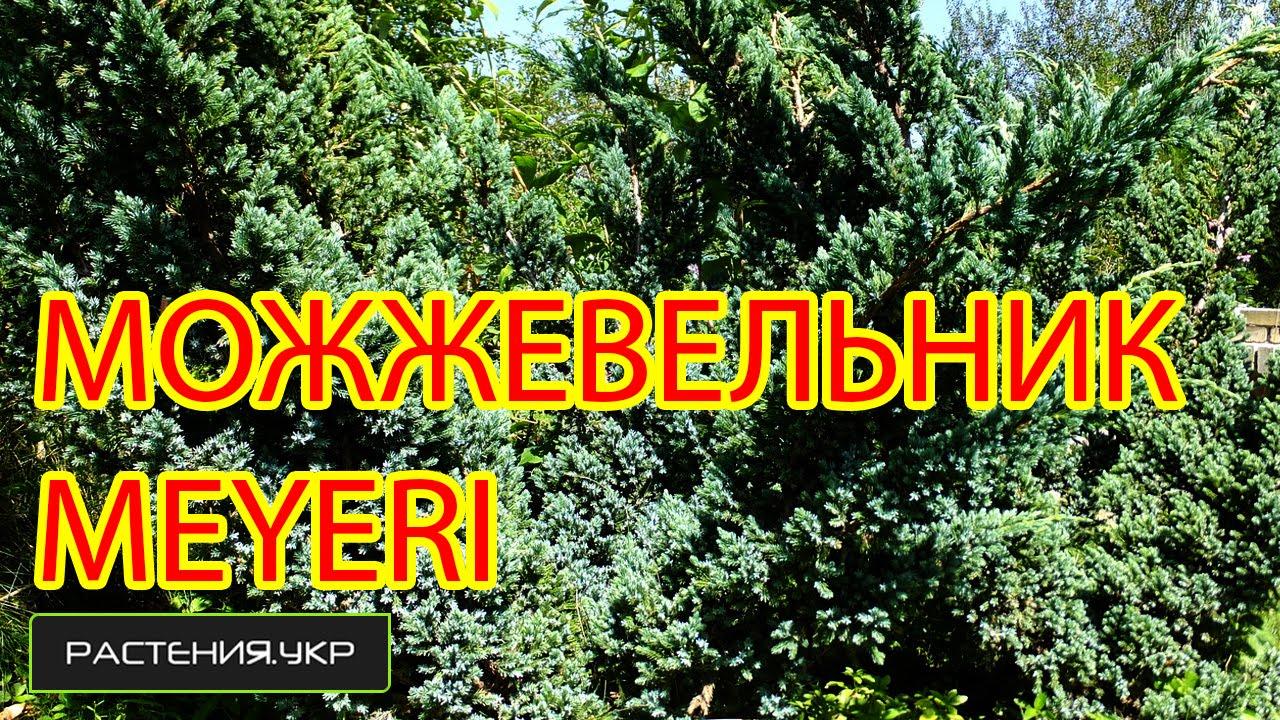 Агро-Флора (Харьков, Малая Даниловка) - питомник хвойных растений .