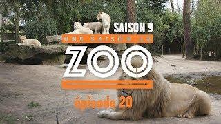 Une Saison au Zoo S9 - Ep20
