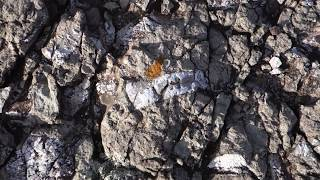 Fossils in Maragua