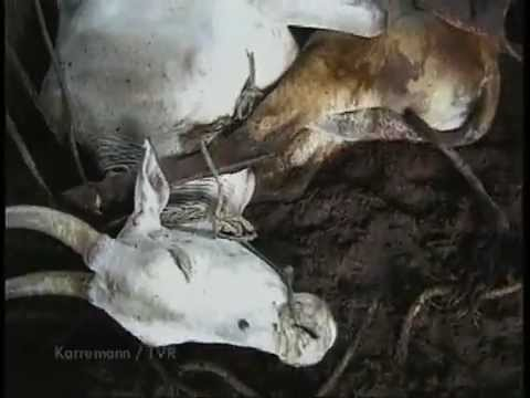 Skin Trade India- Narrated by Pamela Anderson (Peta)