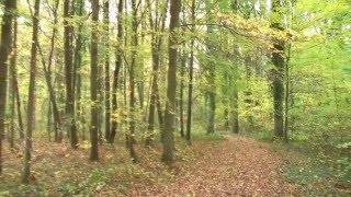 Vente Forêt Rambouillet YVELINES, 397 Forêt Investissement