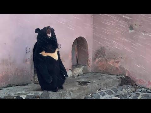 В зоопарке Еревана появился душ для зверей