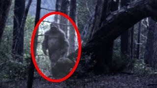 Top 10 Bigfoot Sightings Caught On Tape   Scary Bigfoot Caught On Camera