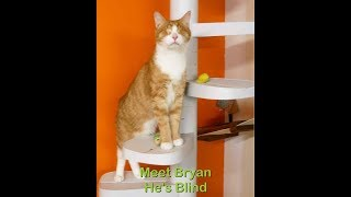 Even Bryan a blind cat can climb a Monkee Tree