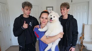 Video WE SURPRISED OUR MOM WITH A PUPPY! download MP3, 3GP, MP4, WEBM, AVI, FLV November 2017