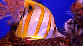Visitamos Palma Aquarium Mallorca