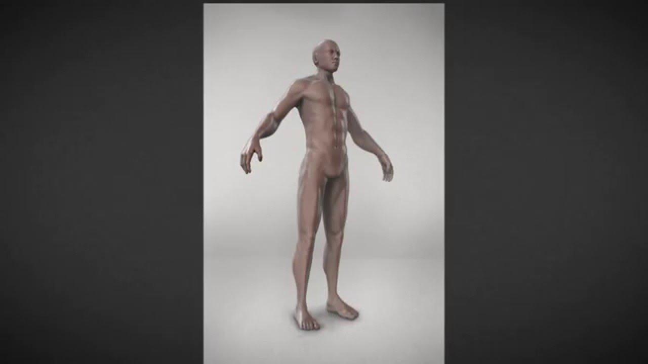 Curso: Escultura Digital / Anatomía Masculina - YouTube