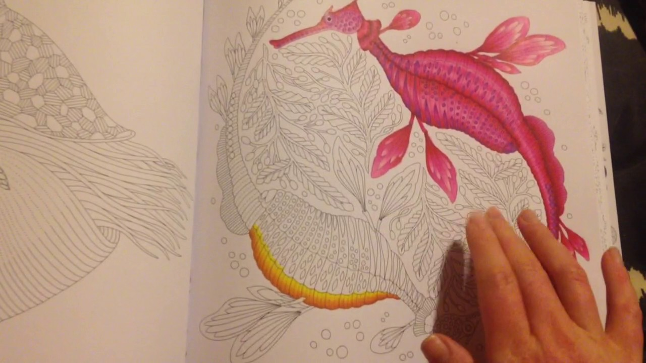 Millie Marotta Curious Creatures Colouring Book Review