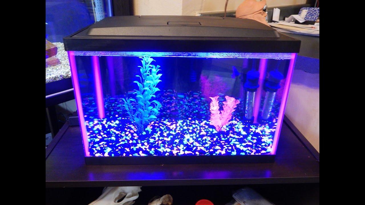 petsmart 5 gallon glofish