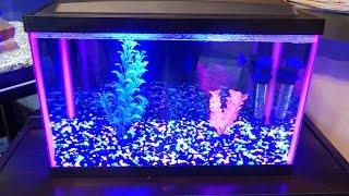 petsmart 5 gallon glofish tank review