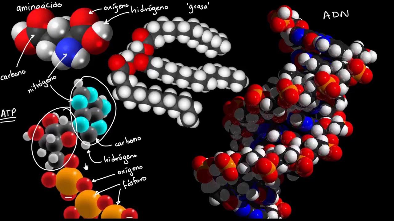 Bloques básicos de construcción de moléculas biológicas | Khan Academy en  Español - YouTube