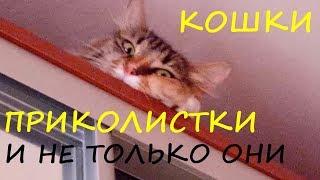 КОШКИ ПРИКОЛИСТКИ Смешные кошки Приколы про кошек Видео You Tube Дикая природа