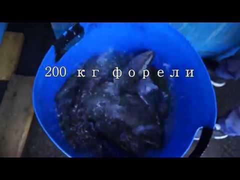 Зарыбление форелью платного пруда в КФХ Прудцы. Ловля форели на платном пруду.