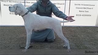 Dog Show Islamabad/ rawalpindi Part 1  #dogshows #dogshowpakistan