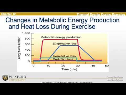 Thermoregulation During Exercise