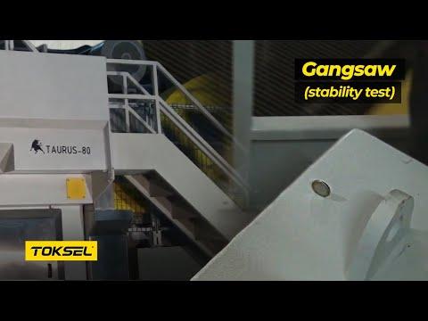 Toksel Makina TAURUS-80 KATRAK MAKİNESİ Dik Para Testi