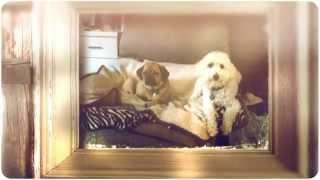 Dog Walkers Near Me NJ - Aunt Darlene's Pet Sitting & Dog Walking Service, LLC Near Me