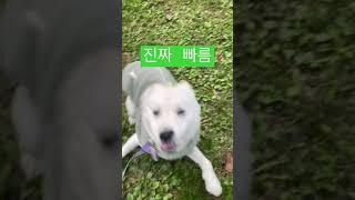 내 별명은 봉사인볼트/순간이동 하는 진돗개/jindo …