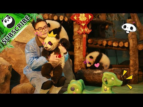 Happy Father's Day, panda nannies! | iPanda