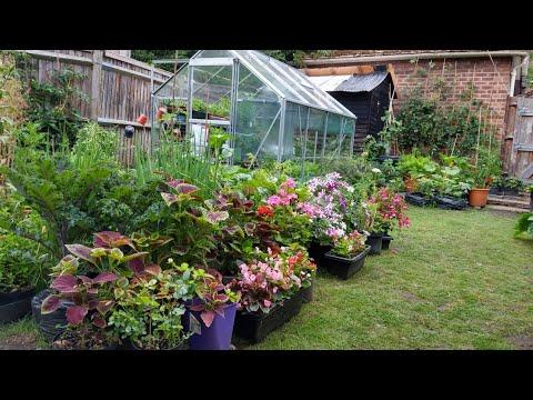 ปลูกอะไรได้บ้างในสวนหลังบ้านเล็กๆ  -  small back garden tour (2 Jul.20)