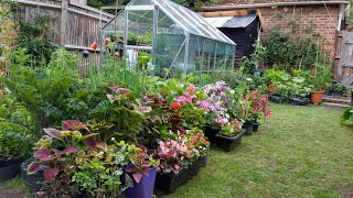 ทัวร์สวนหลังบ้านเล็กๆในพื้นที่จำกัด  - ปลูกอะไรได้บ้าง? / small back garden tour (2 Jul.20)