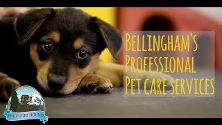 Bellingham Dog Trainer - Thinking Dog With Laura Berger - Promo By The Puget Hound
